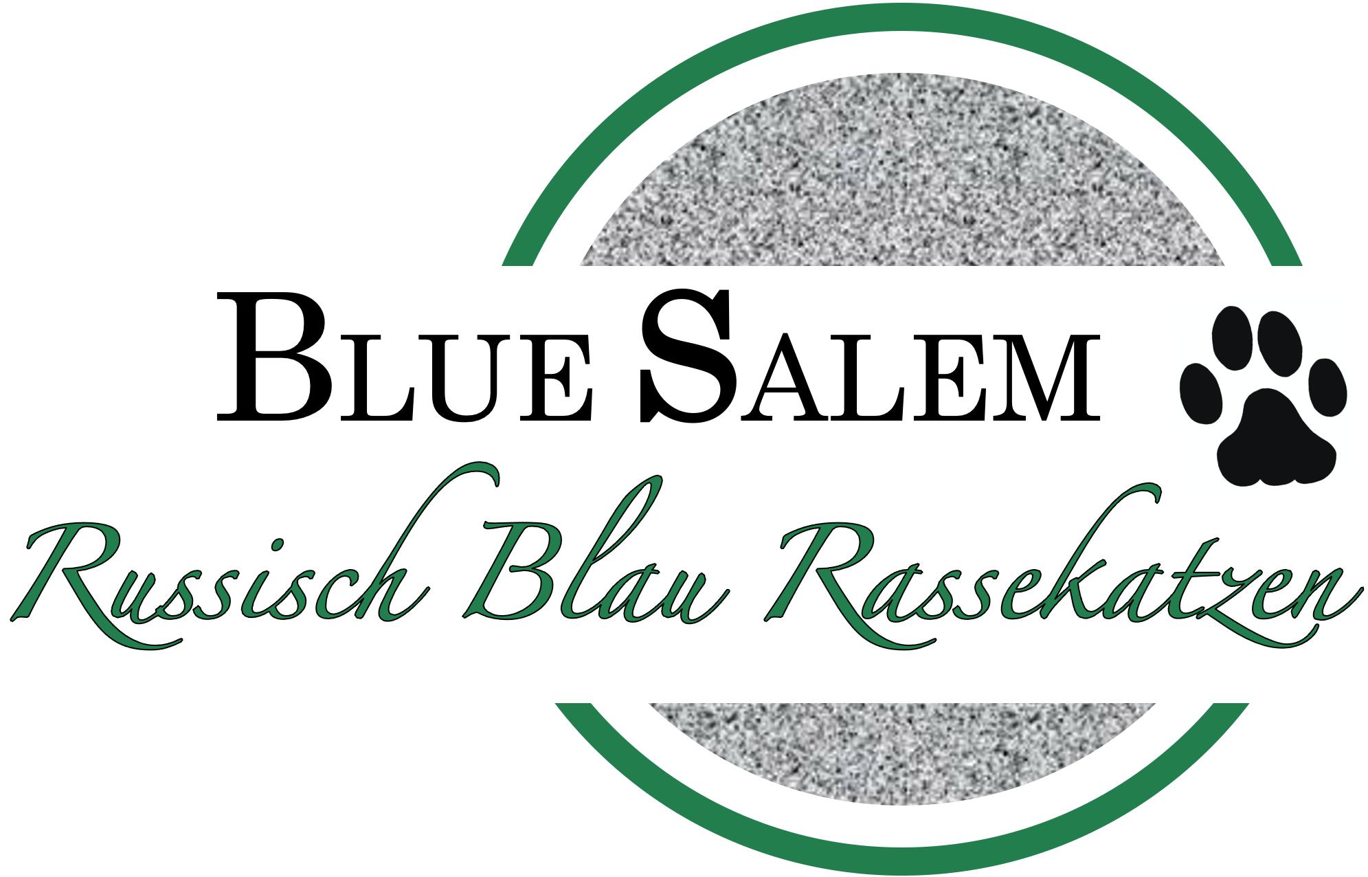 Russisch Blau Rassekatzen